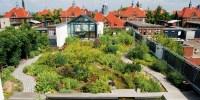 Intensive green roofs   Urban green-blue grids
