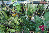 Basics of Starting an Apartment Vegetable Garden - Urban ...