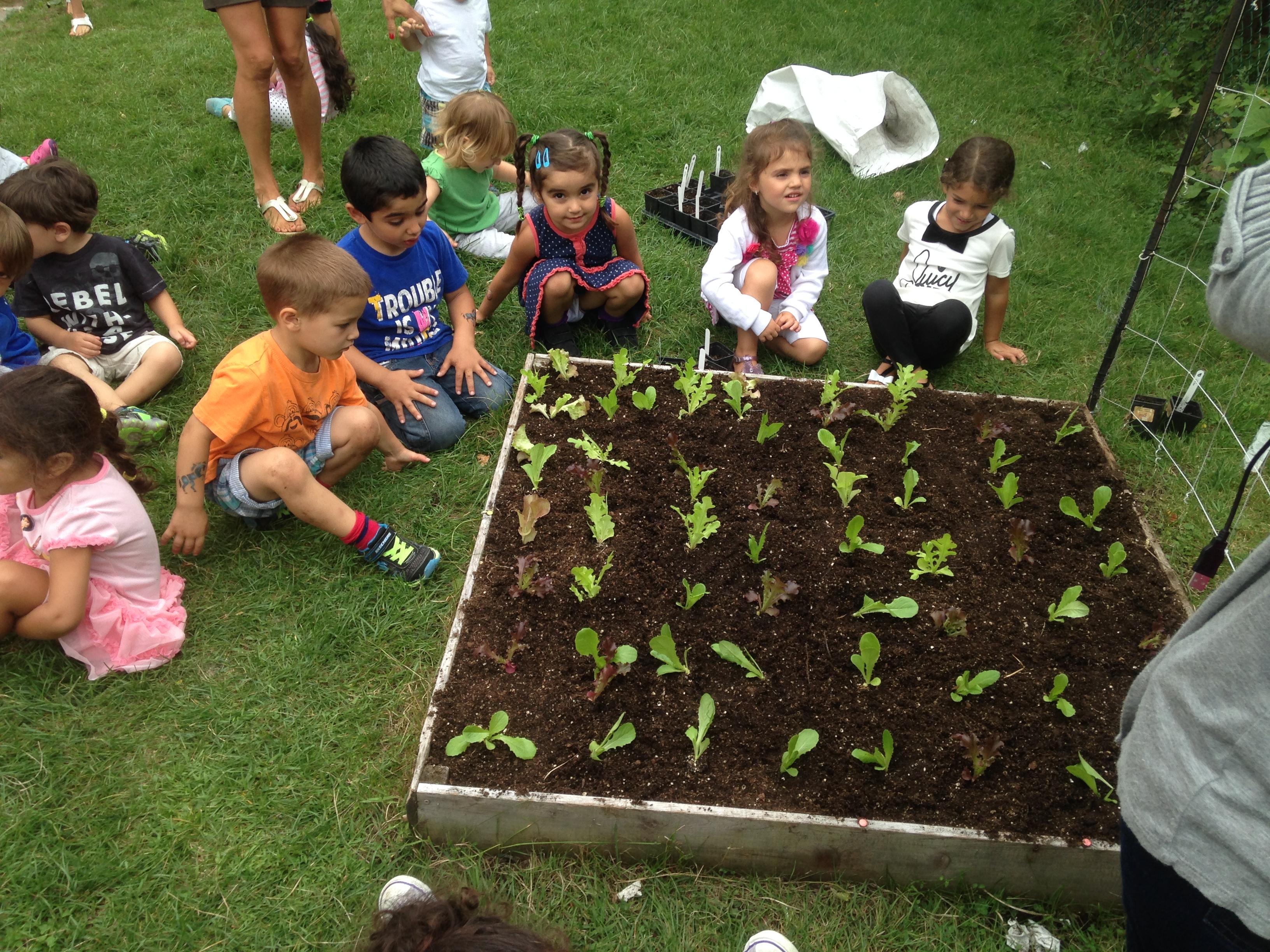 Kids love to dig in the dirt school vegetable gardens