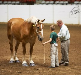 Brian judging youth showmanship at the 2015 Ohio State Fair Draft Horse Show