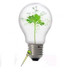 Los Diez Mandamientos Ecológicos de la UTZAC