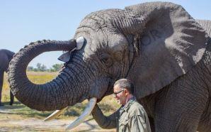 Fillere adanan bir yaşam