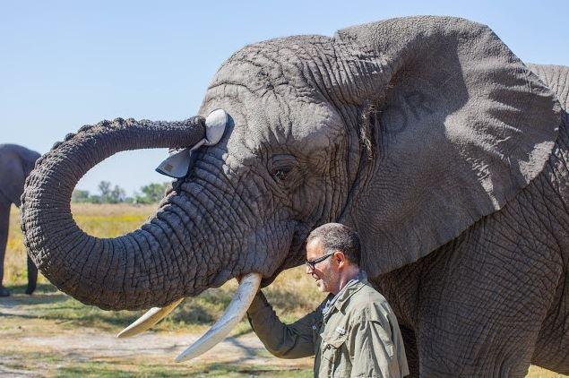 Fillere adanan bir yaşam 1