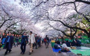 Tokyo'da parkta unuttuğum iPhone'a ne oldu?