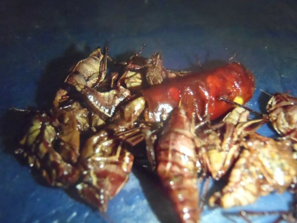 Photo of chapulines, grasshoppers