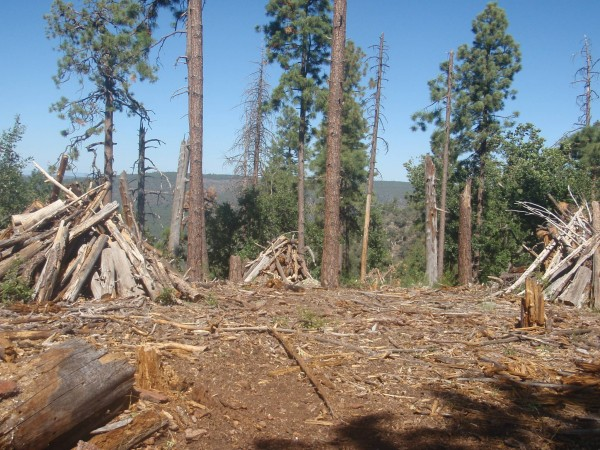 Preparation for prescribed burns in Tonto Forest