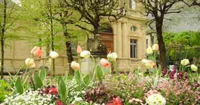 Flowers in Bordeaux