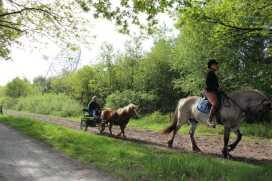 Het Dwingelderveld is ideaal voor paardenliefhebbers