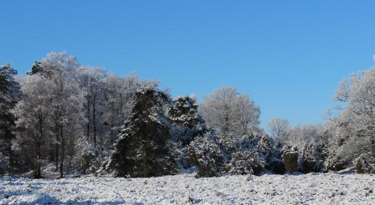 Het Nationaal Park Dwingelderveld is ook in de winter prachtig