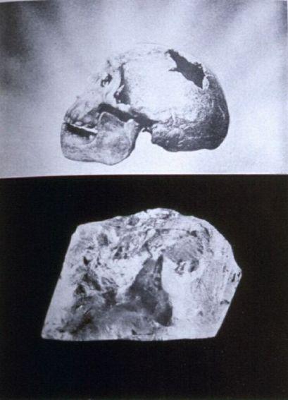 """""""Bodas de diamante"""", cráneo petrificado obtenido por Juan Larrea"""