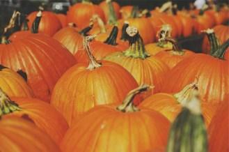 pumpkins-691666_1280