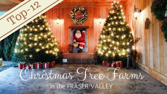 Top 12 Christmas Tree Farms in the Fraser Valley