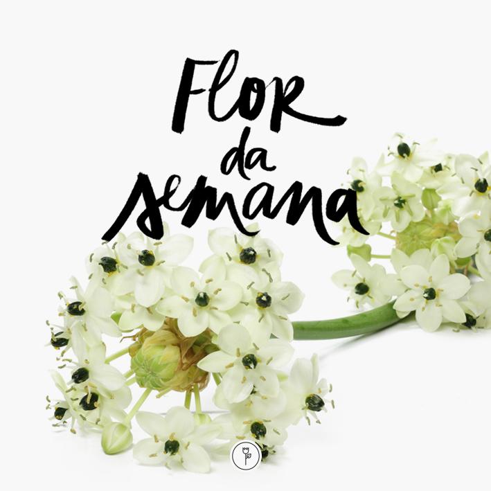 FLOR DA SEMANA 02set