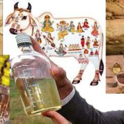 cow-urine-qualities