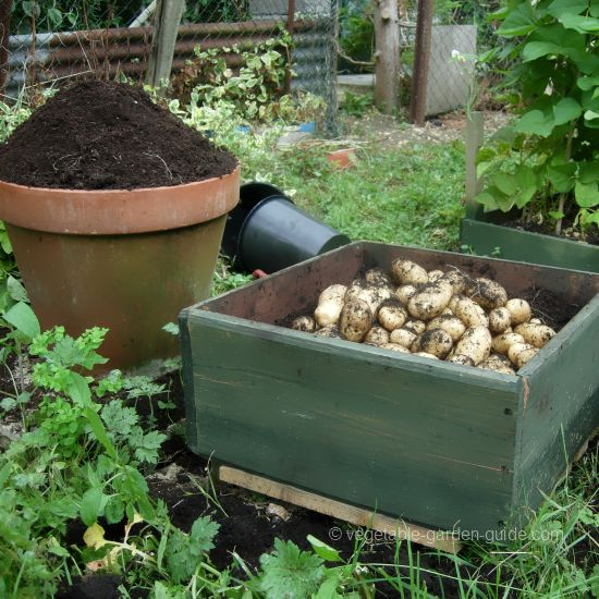 How To Grow Potatoes For The Very Best And Tastiest Vegetables