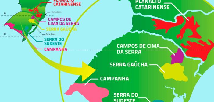 Vinho Brasileiro é Bom?