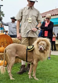 HOWL-O-Ween  Dog Costume Contest | Ventura Harbor Village ...