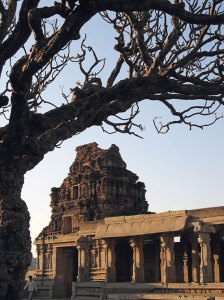An ancient frangipani tree at the Vitthala Temple courtyard adds drama to the ruins