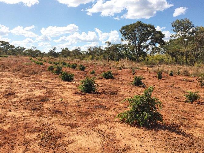 Backfilled plantations