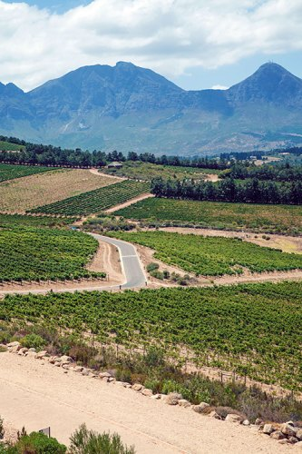 View of vineyards from the Waterkloof Wine Estate