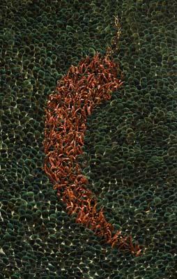 Subodh Kerka, The Chillies