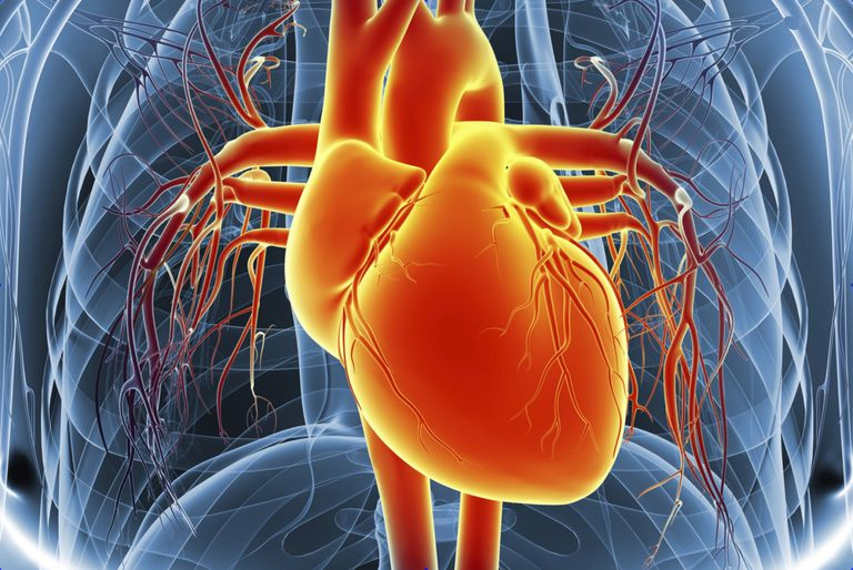 Learn How Blood Flows Through The Heart And Lungs