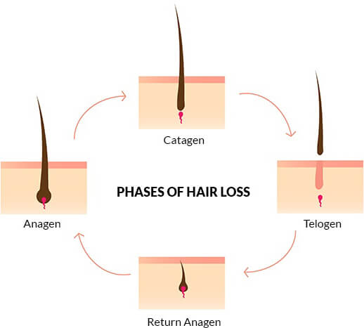 Hair Loss - All you need to know