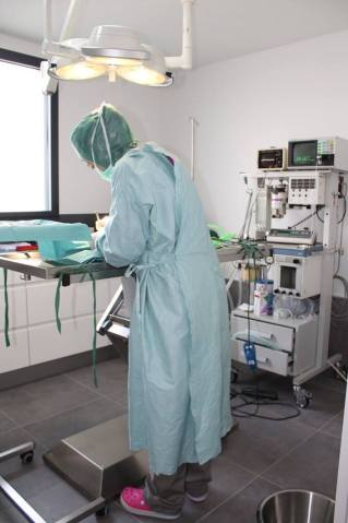 Chirurgie de convenance : castration de chien