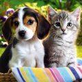 Puppy and Kitten Vetco