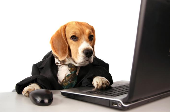 Can You Really Trust Online Vet Tech Programs? Become a Vet Tech