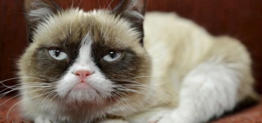 Protozoal Diseases in Cats