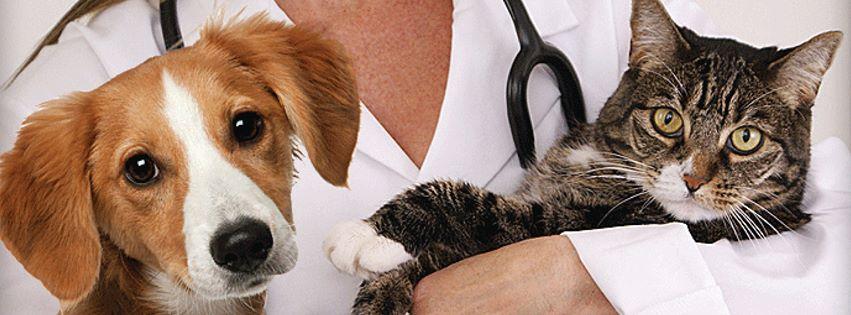 Veterinarian Job Experience Useful Skills for Vets VetHow