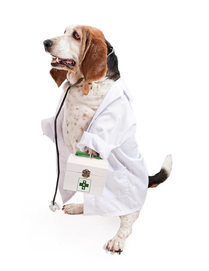 Veterinarian Job Experience Useful Skills for Vets VetHow - veterinarian job description