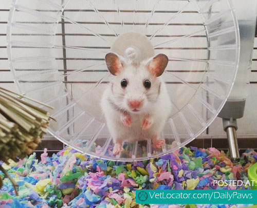 cute mice Archives - Daily Paws Daily Paws
