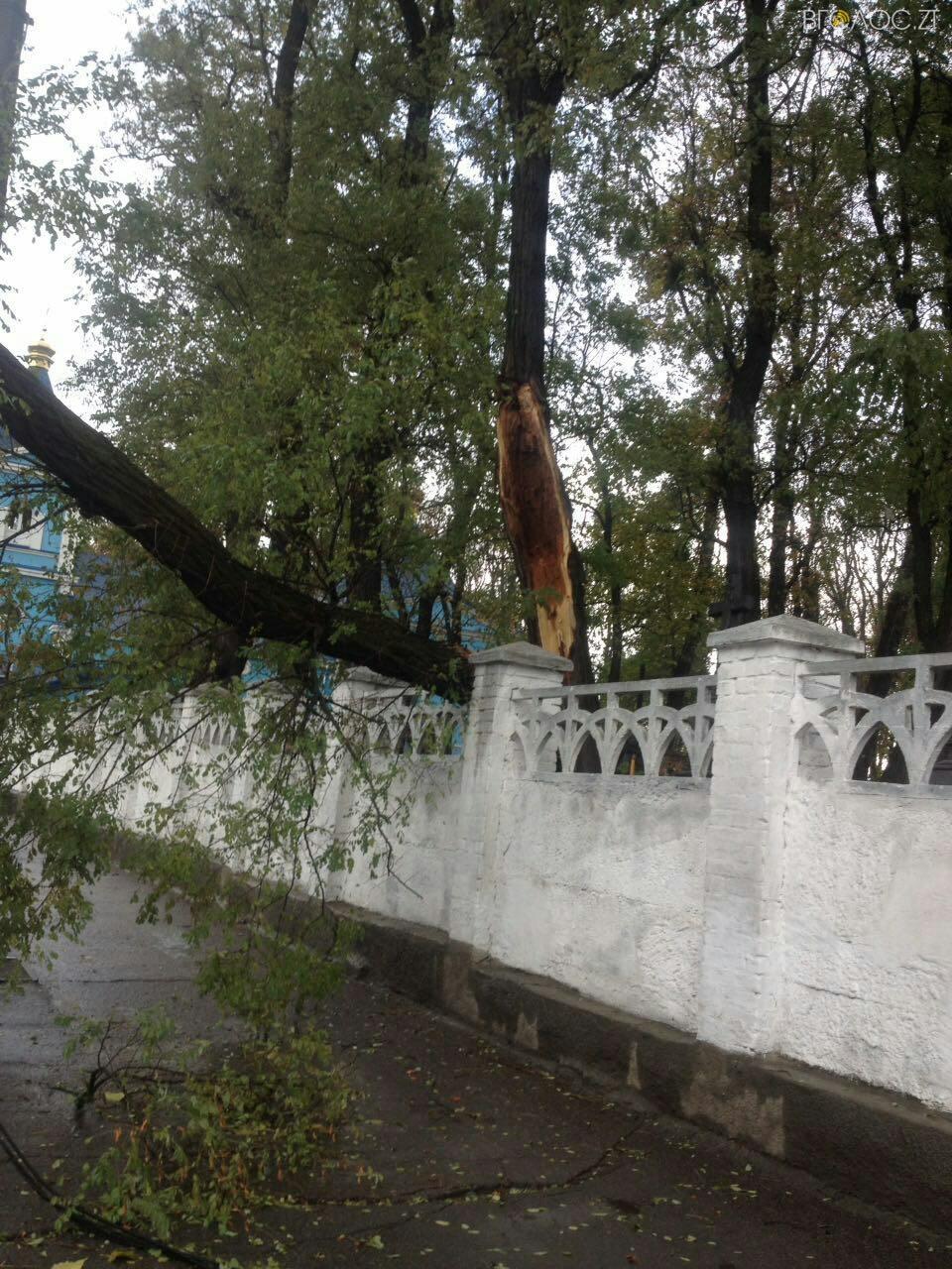 В Житомире дерево упало на дорогу и повалило светофор 12