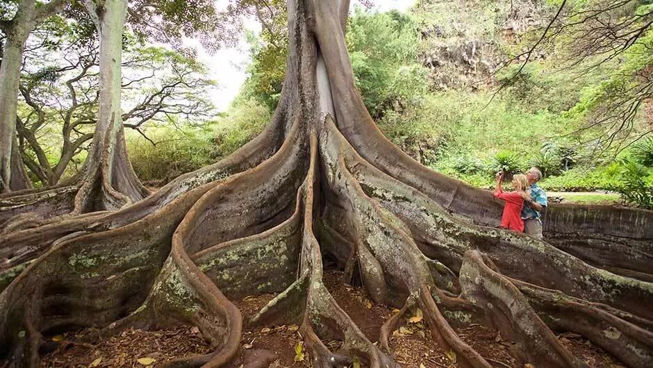 Hawaii 5 Cose Da Vedere Nell 39 Isola Di Kauai Viaggi Low Cost