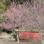Constanza y Su Encantador Valle de Las Flores