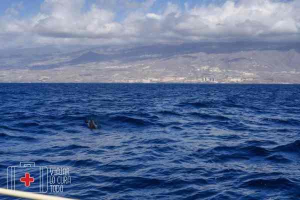 excursion ballenas tenerife (11)