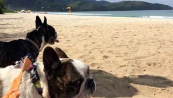 Viajar com cachorro de carro Maresias Paraty IMG_7243