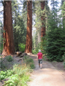 sequoia_Mark walking