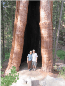 sequoia_shelter