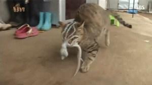 Η γάτα και το χταπόδι