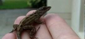 Man gets bit by poisonous lizard