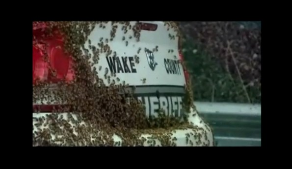 PERLES-une-voiture-de-police-attaquee-par-50000-abeilles