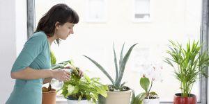 Τα οφέλη των φυτών στο σπίτι