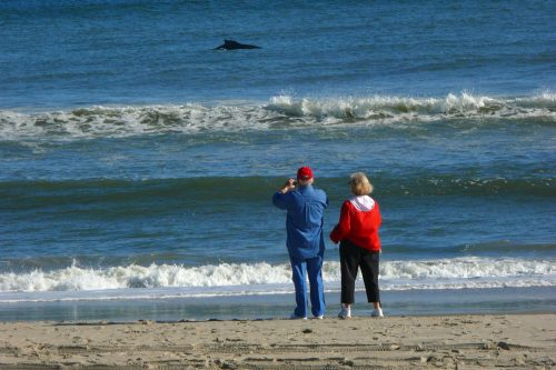Whale and Porpoise Fishing on the Outer Banks - Village Craftsmen of