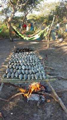 fresh caught piau fish with the new net is smoked in the  kamayura camp in the forest