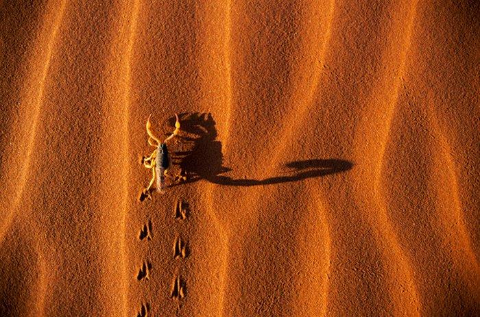صور حيوانات روعة 2016 ، صور حيوانات مميزة 2016 ، حيوانات جديدة روعة scorpion.jpg