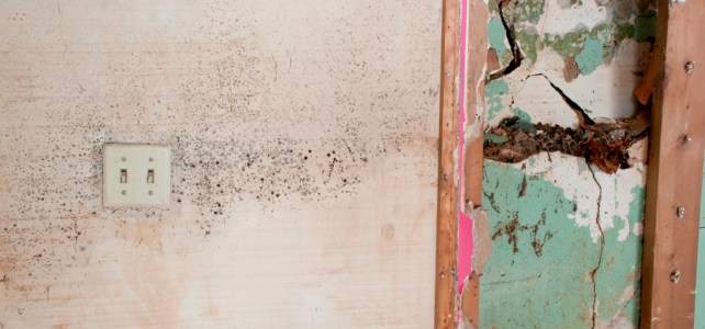 Important questions to ask when hiring mold remediation services
