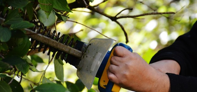 What To Consider when buying a hedge trimmer
